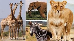 National Park and Wildlife Sanctuaries
